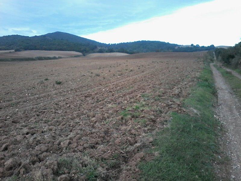 Azienda agricola in Campagna Snc, Manciano