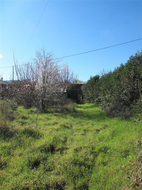 Terreno agricolo, Vitorchiano