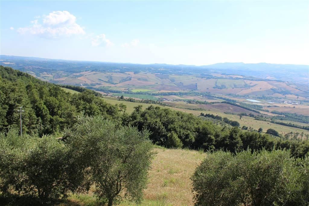 Terreno agricolo, Trevinano, Acquapendente