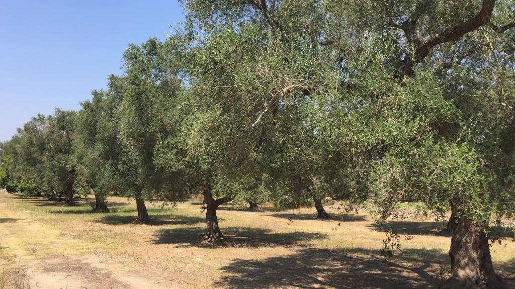 Terreno Agricolo in vendita a Mesagne, 9999 locali, prezzo € 8.000 | PortaleAgenzieImmobiliari.it