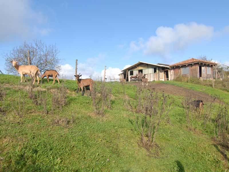 Azienda Agricola in vendita a Murazzano, 12 locali, prezzo € 480.000 | PortaleAgenzieImmobiliari.it