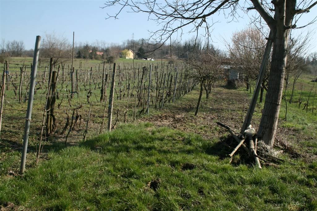 Terreno Agricolo in vendita a Tortona, 1 locali, prezzo € 30.000 | PortaleAgenzieImmobiliari.it