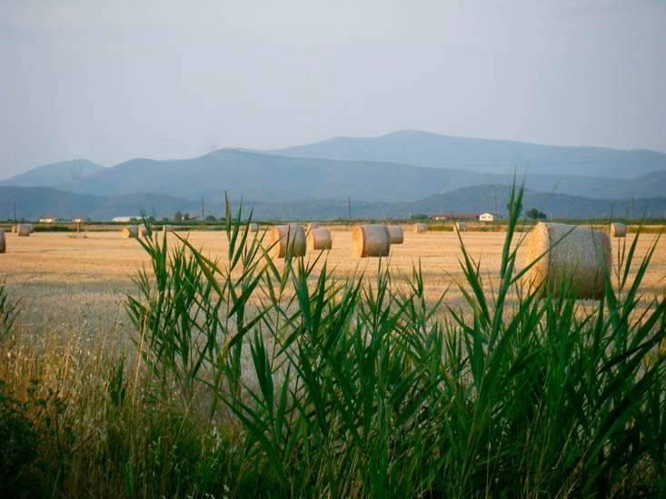 Agriturismo, Castiglione Della Pescaia, in ottime condizioni