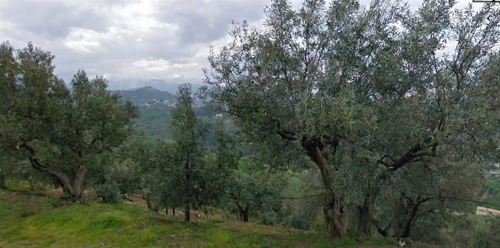 Terreno agricolo, Viale Trieste, Cosenza