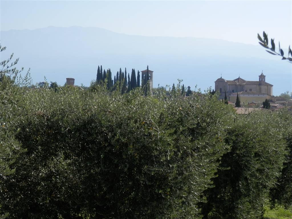 Terreno Edificabile Residenziale in vendita a San Felice del Benaco, 5 locali, prezzo € 280.000   PortaleAgenzieImmobiliari.it